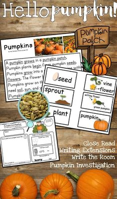 I love how much my kids love this unit! It is so amazing to listen to their vocabulary grow and their writing skills take off! They LOVE doing the Pumpkin Investigation! Especially counting the seeds, measuring the circumference and recordi Green Pumpkin, A Pumpkin, Pumpkin Carving, Hands On Activities, Kindergarten Activities, Language Activities, Teaching Kindergarten, Teaching Kids, Creative Teaching
