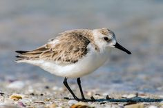 Incredible! 4 Epic Bird Migrations