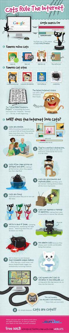 Pourquoi les chats font la loi sur Internet #Infographie