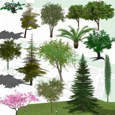 A collection of tropical trees and conifers as SketchUp 3D models. Free download! Sketchup Free, Sketchup Model, Playground Design, Landscape Architecture Design, Parking Design, Landscaping Plants, Trees And Shrubs, Planting Flowers, 2d