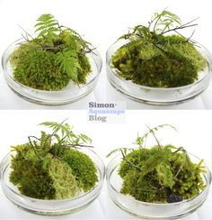 Moss Dish by Simon Estades