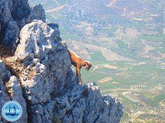 Wandern auf Kreta im Frühjahr 2021 Greece Holiday, Crete Greece, Beach Holiday, Island, Mountains, Tips, Travel, Block Island, Trips