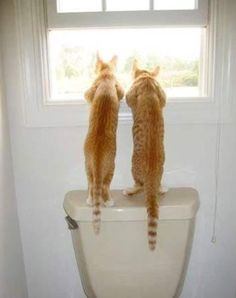 Funny Animal Pictures - View our collection of cute and funny pet videos and pics. New funny animal pictures and videos submitted daily. Funny Cats, Funny Animals, Cute Animals, Funniest Animals, Silly Cats, Wild Animals, Crazy Cat Lady, Crazy Cats, Beautiful Cats