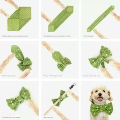 Enter to get an Earth Rated® Bandana . - Step inside to get an Earth Rated® Bandana … – - Diy Dog Collar, Dog Collars, Dog Collar Bandana, Dog Clothes Patterns, Dog Bows, Bow Ties For Dogs, Bandana For Dogs, Bandana Bow, Puppy Bandana