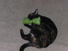 cat with catnip #catnip - Find out more about Cat nip at Catsincare.com!