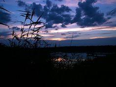 Bulrush evening sunset