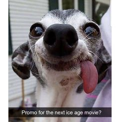 22+ Funny Animal Pictures Of ToDay's - #funnymemes #funnypictures #humor #funnytexts #funnyquotes #funnyanimals #funny #lol #haha #memes #entertainment