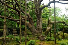 美しい紅葉とお茶でほっこり和む、京都のお寺5選   TripAdvisor Gallery