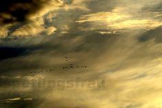 KunSTrich - Vogelengel - Fotografie 20 x 30  von sperlingsfrau auf DaWanda.com