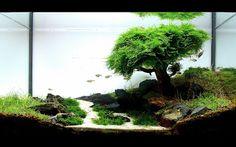Bonsai inside Aquarium
