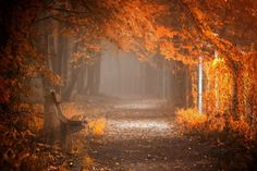 There is a harmony in autumn, and a luster in its sky, which through the summer is not heard or seen, as if it could not be, as if it had not been!  Waiting to Fall by Ildiko Neer