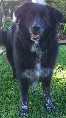 My dog Eva. Betsy, Houston, Texas. 2/13/14.