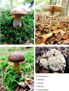 Get out in the mushrooms - Mushroom growing Mushroom Dish, Mushroom Fungi, Mushroom Pictures, Edible Wild Plants, Garden Pool, Pool Designs, Stuffed Mushrooms, Vegetables, World