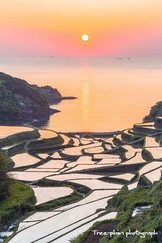 Rice fields, Japan