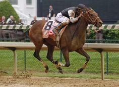 Mine That Bird - Kentucky Derby Winner 2009 Trainer Chip Woolley, NM Preakness Stakes, American Pharoah, Derby Winners, Churchill Downs, Sport Of Kings, Thoroughbred Horse, Racehorse, Kentucky Derby, Horse Racing