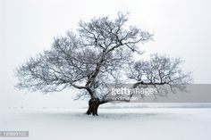 Stock Photo : Snowy Tree