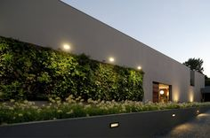A completely benign green wall and planter: a perfect riskless fit for the E. wall of back duplex.