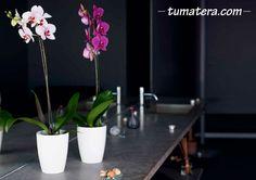 Nos encantan las orquídeas. Es por eso, que tenemos para ellas una maceta cuya estructura interior les proporcionara las mejores condiciones. Encuentralas en: http://www.tumatera.co/products/mpa-1413-san-remo/