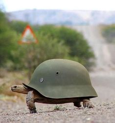 army turtle! ♡