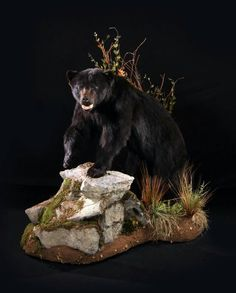Amazing grizzly bear taxidermy mount