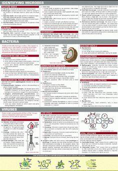 Interesting Life Hacks, Infographics & Links: Infographic Mini Series : Microbiology III