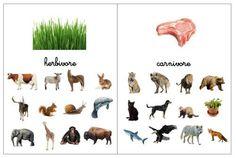 Montessori Science, Preschool Science, Montessori Baby, Animal Crafts For Kids, Animal Projects, Herbivore And Carnivore, File Folder Activities, Montessori Materials, Teaching Kids