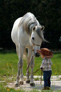 Os cavalos mais lindos são os da cor branca