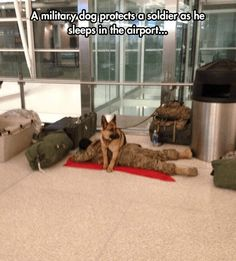 15 Photos Of Military Service Dogs That Prove They Are More Than Just Dogs - World's largest collection of cat memes and other animals Military Working Dogs, Military Dogs, Military Soldier, Military Service, Police Dogs, Cute Puppies, Dogs And Puppies, Cute Dogs, Doggies