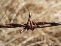 Barbed wire is sharp, so be careful when making art with it.
