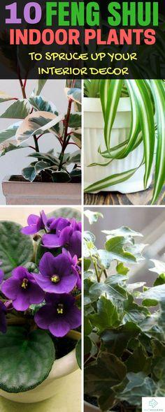 Feng Shui Indoor Plants #fengshui