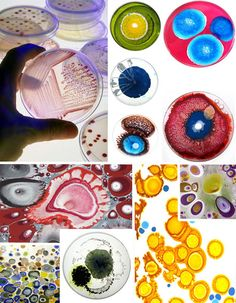 Petri Dish Portraits: Eco-Art That Will Literally Grow On You! - WebEcoist