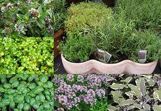 Bylinky: šalvěj, dobromysl, bazalka, máta Korn, Herb Garden, Herbs, Plants, Projects, Lawn And Garden, Syrup, Balcony, Log Projects