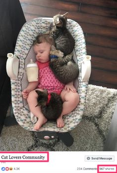 if i fits i sits - your daily dose of funny cats - cute kittens - pet memes - pets in clothes - kitty breeds - sweet animal pictures - perfect photos for cat moms Animals And Pets, Funny Animals, Cute Animals, Cute Kittens, Cats And Kittens, Cute Cat Quotes, Kitten Quotes, Baby Cover, Tier Fotos