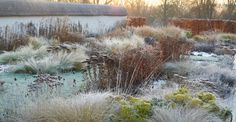 Perennial border with grasses, covered in frost -- landscape design: Tom Stuart-Smith -- photo: Allan Pollok-Morris