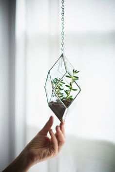 NEW Iridis Prism Terrarium, small -- for air plant terrarium or small succulent -- stained glass -- terrarium supplies -- eco friendly by ABJglassworks on Etsy Air Plant Terrarium, Succulent Terrarium, Hanging Terrarium, Small Terrarium, Air Plants, Indoor Plants, Potted Plants, Terrarium Supplies, Do It Yourself Inspiration