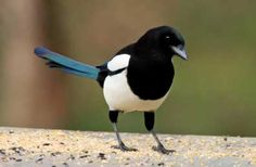 Be like a magpie- who collects shiny objects to bring back to their nests