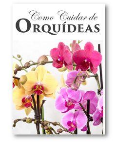 Guia Prático Como Cuidar de Orquídeas |