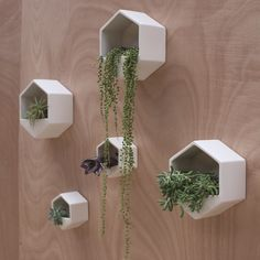 Hexagon Wall Hung Planter | White | Collected by LeeAnn Yare