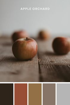 Design Tip: One of the simplest ways to find color inspiration is in your everyday life. Take a moment to look around you. Even the simplest things can be rich with color. #ApplePicking #FallColors #AutumnColors #FallColours #AutumnColours #BrownColorPallete #OrangeColorPalette #WarmColors #MutedColors #ColorInspiration #ColorPalette #ColorIdeas #DesignTips
