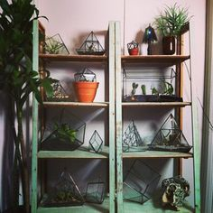 those plants been bothering you lately? dw, i put a glass cage round all of em∆