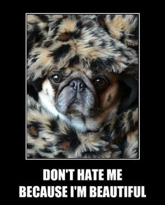 Beautiful pug in leopard wrap
