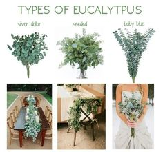 eucalyptus adds green to bouquet. baby blue preferred