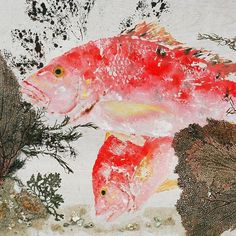 red gyotaku