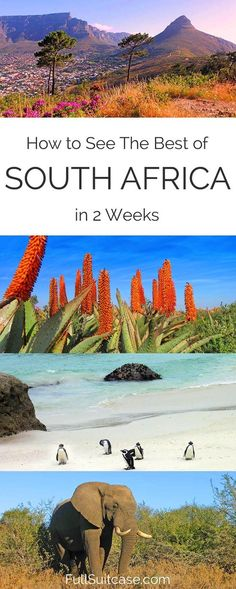 Complete South Africa Trip Itinerary in 2 Weeks See the best of South Africa with this complete 2 week itinerary from Johannesburg to Cape Town Visit South Africa, Cape Town South Africa, East Africa, Durban South Africa, South Africa Honeymoon, South Africa Safari, Africa Flag, Africa Destinations, Travel Destinations