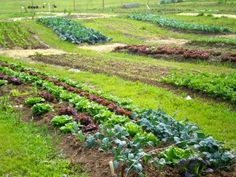 Our beyond organic farm.
