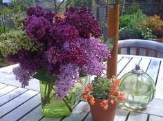 How to Root Lilac Cuttings