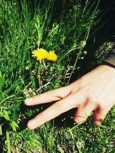 Sarı çiçeğim... 1 Mayıs 2015 (Tunceli/Turkey)
