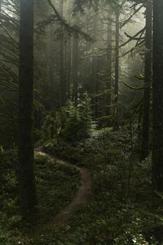 Misty forest at Silverton falls area, Oregon | by Anna Calvert