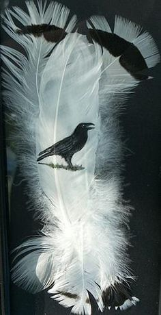 Crow Painting by Shirley Malar - Crow Fine Art Prints and Posters for Sale