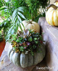 "Succulent pumpkin of Laura Balaoro by Sweetstuff ""Candy"", via Flickr"